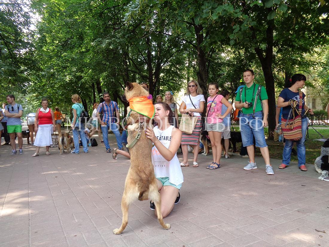 выставка-дорога-домой-дефиле-собак-приюта-кожухово-1