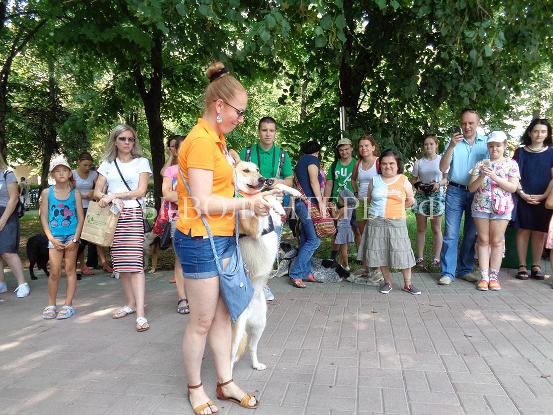 выставка-дорога-домой-дефиле-собак-приюта-кожухово-2