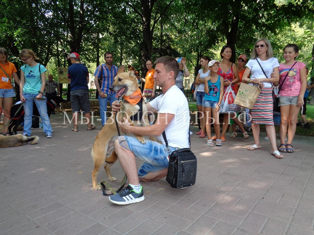 выставка-дорога-домой-дефиле-собак-приюта-кожухово-3