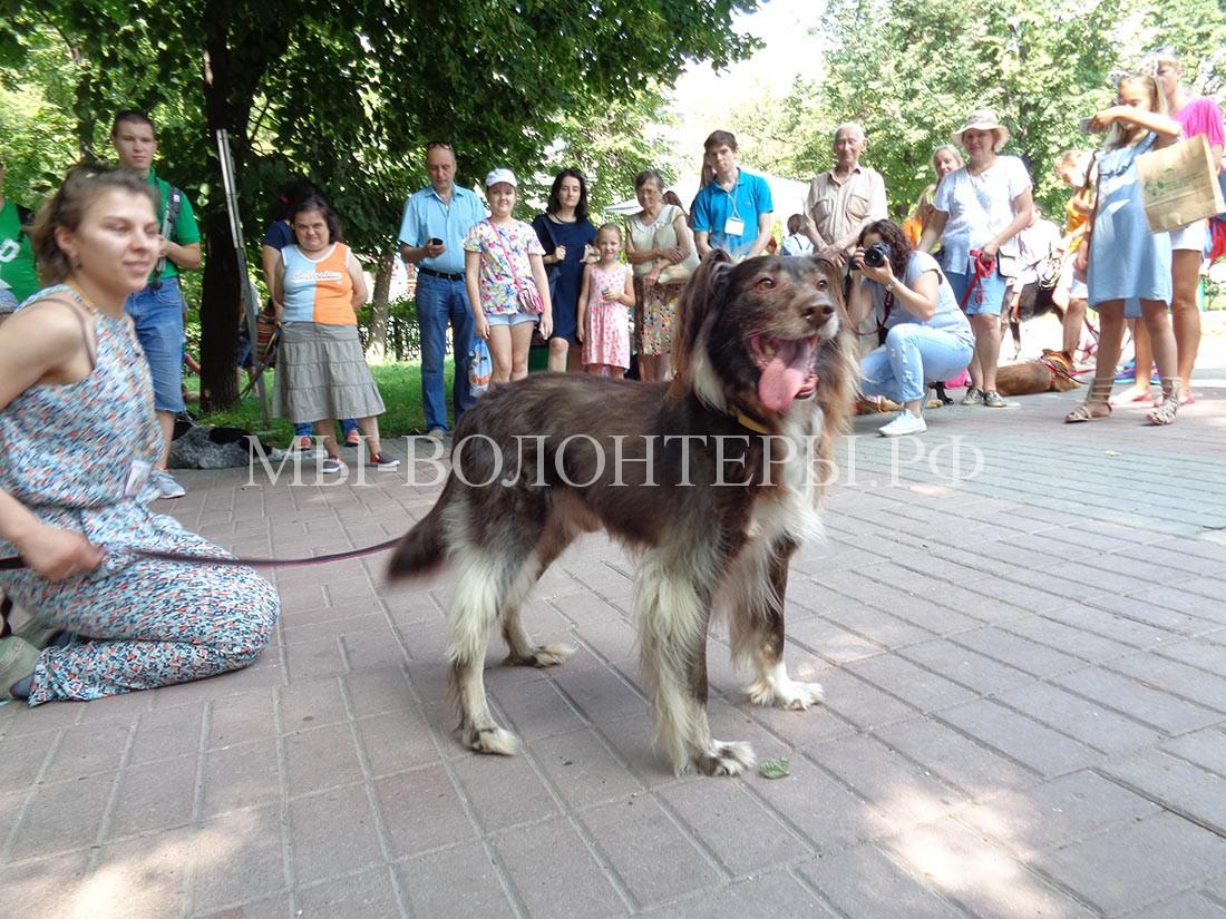 выставка-дорога-домой-дефиле-собак-приюта-кожухово-4