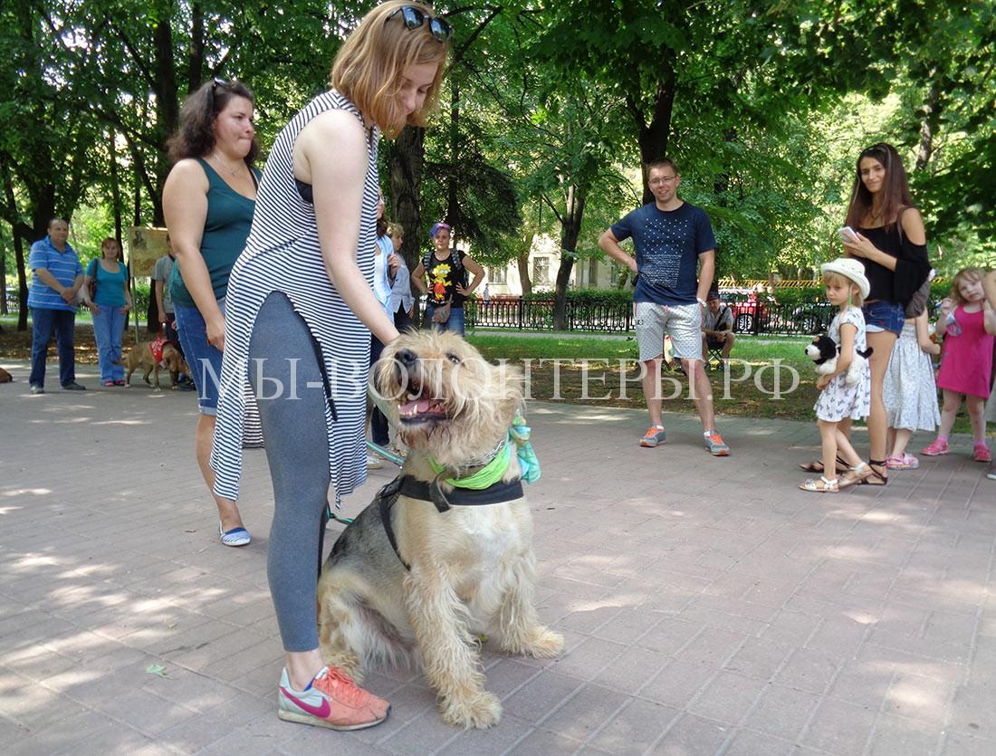 выставка-дорога-домой-дефиле-собак-приюта-кожухово-5