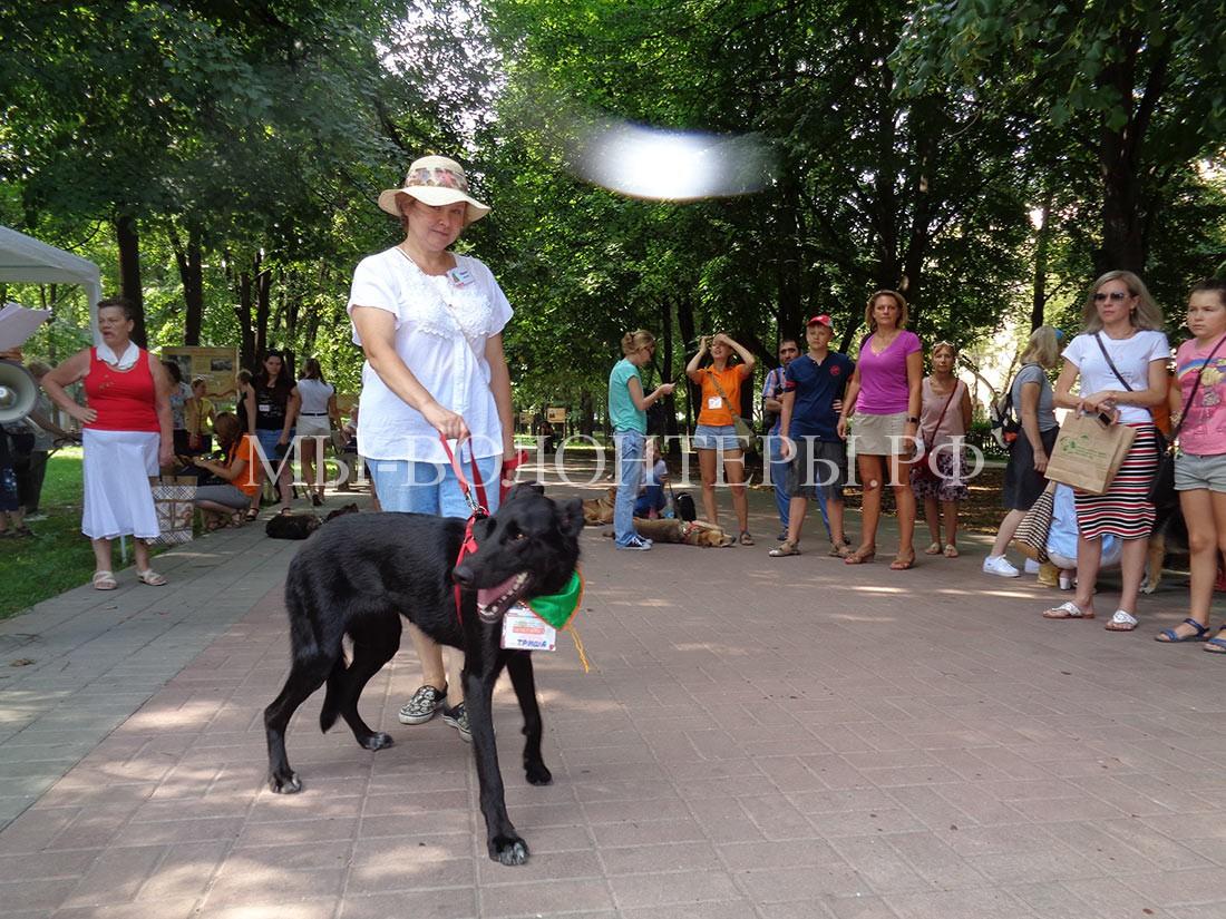 выставка-дорога-домой-дефиле-собак-приюта-кожухово