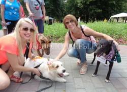Тина и Нора представили приют Щербинка на выставке-ярмарке «Дорога к дому», 30.07.16