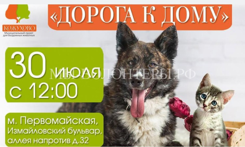 Выставка приютских собак «Дорога к дому» 30 июля 2016 года