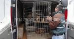 Об устранении нарушений в организации отлова бездомных животных