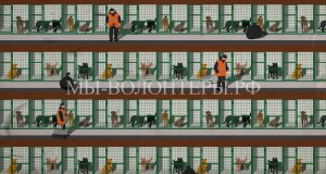 Передел бездомных животных на московском рынке приютов