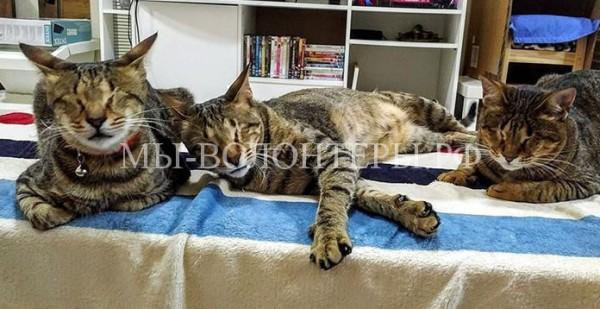 Сразу три слепых кота нашли новый любящий дом