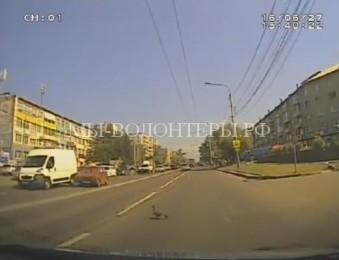 В Красноярске инспектор ГИБДД перекрыл магистраль, чтобы спасти утку с утенком