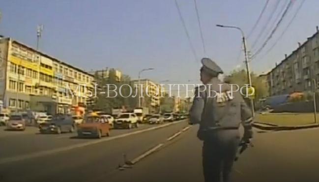 утка с утятами переходит дорогу2