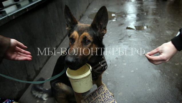 В РФ могут ввести штраф в 10 тысяч рублей за попрошайничество с животными