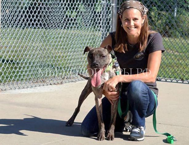 Эта женщина спасает, лечит и социализирует собак со сложным поведением