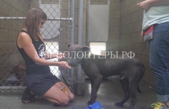 Женщина социализирует собак в приютах4