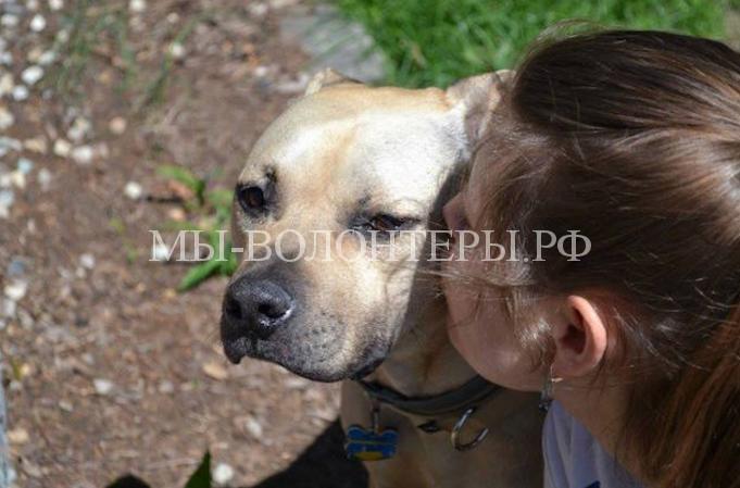 Женщина социализирует собак в приютах5