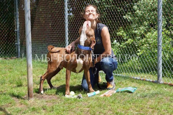 Женщина социализирует собак в приютах7