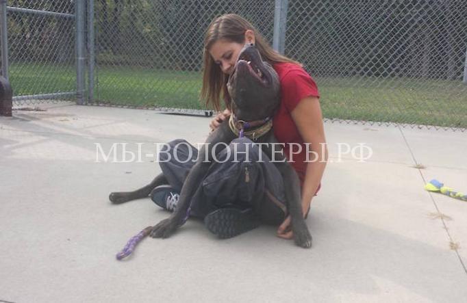 Женщина социализирует собак в приютах8