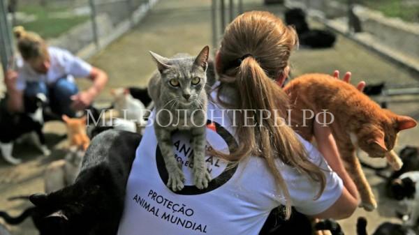 Коты с олимпийского стадиона «Маракана» в Рио-де-Жанейро