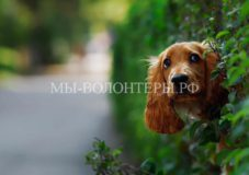 Очаровательные любопытствующие собаки