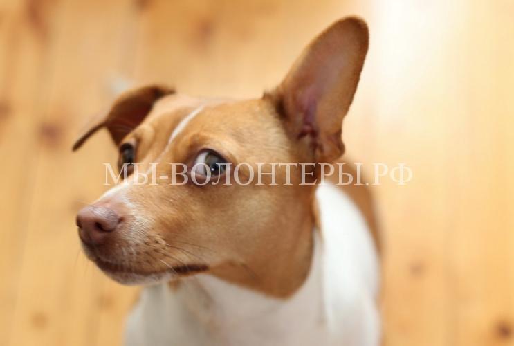 Любопытствующие собаки11