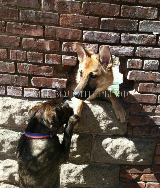 Любопытствующие собаки12