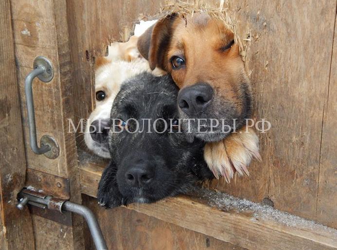 Любопытствующие собаки2