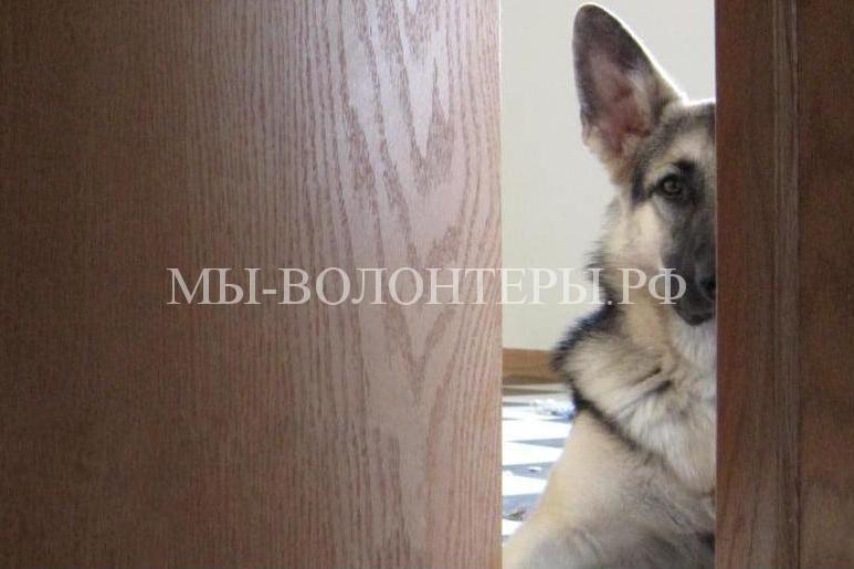 Любопытствующие собаки6