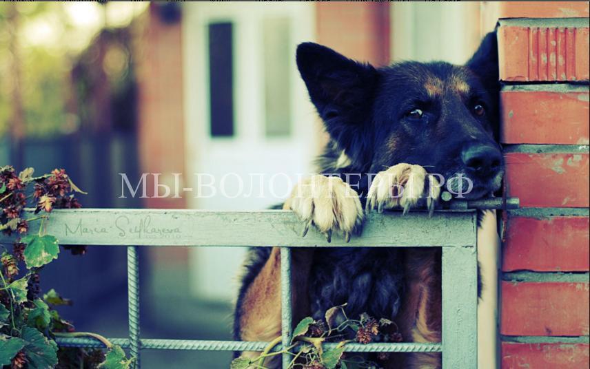 Любопытствующие собаки7