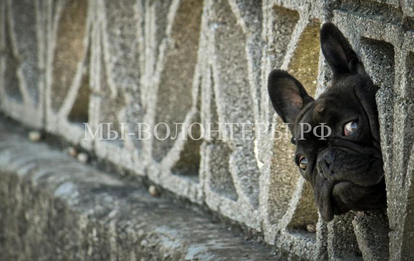 Любопытствующие собаки8