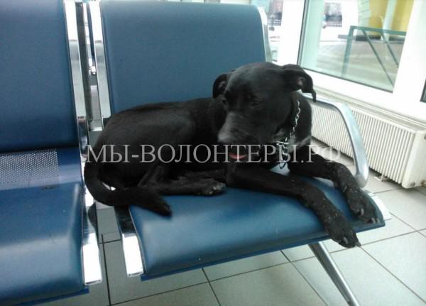 Собака ждет хозяина в зале ожидания вокзала второй день