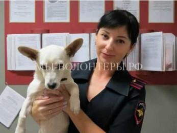 Сотрудники полиции Приморья спасли бездомную искалеченную собаку