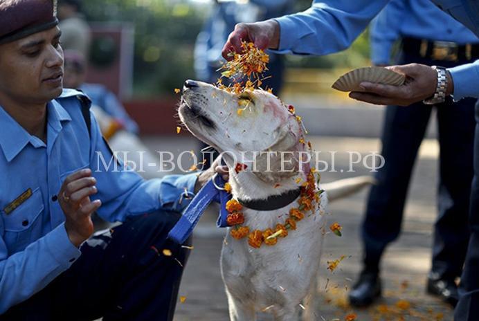 Все лучшее - собакам: праздник в Непале, восхваляющий четвероногих друзей человека