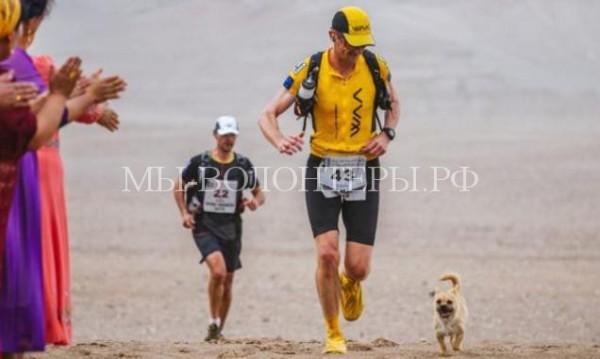 Бездомный щенок обрел хозяина, преодолев марафонскую дистанцию