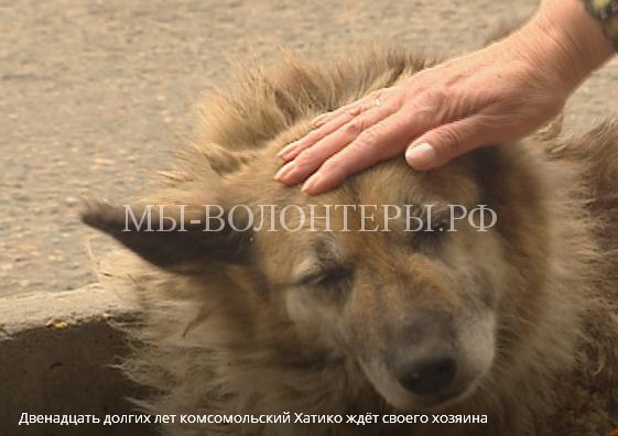 Собака с удивительной судьбой