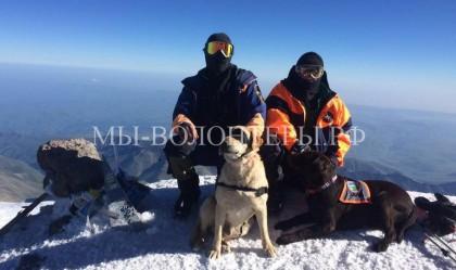 Собаки-спасатели впервые покорили самую высокую вершину России