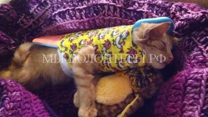 Спасение котенка, сбитого автомобилем