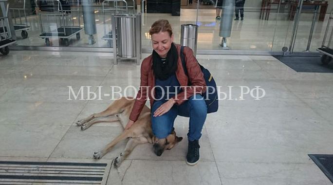 Стюардесса забрала бездомную собаку4