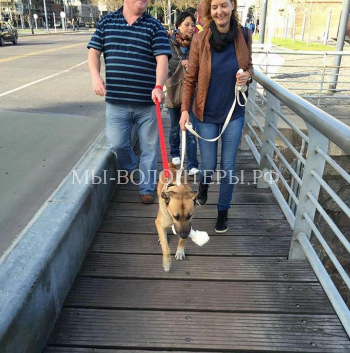 Стюардесса забрала бездомную собаку5
