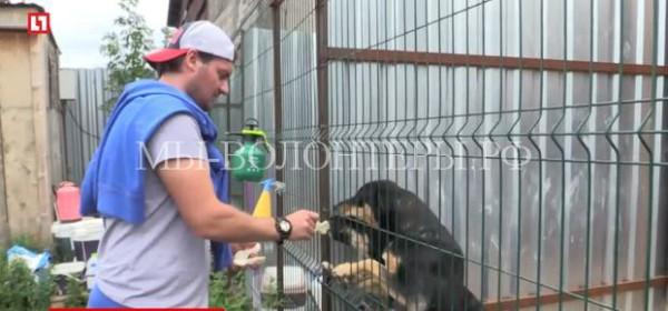Экс-голкипер «Спартака» помогает бездомным собакам в приютах Подмосковья