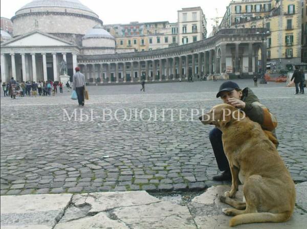 За выброшенное на улицу животное в Италии предусмотрено наказание — год тюрьмы