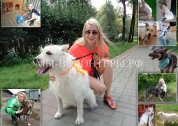Мария и Нора - история становления волонтера и социализации собаки приюта Щербинка