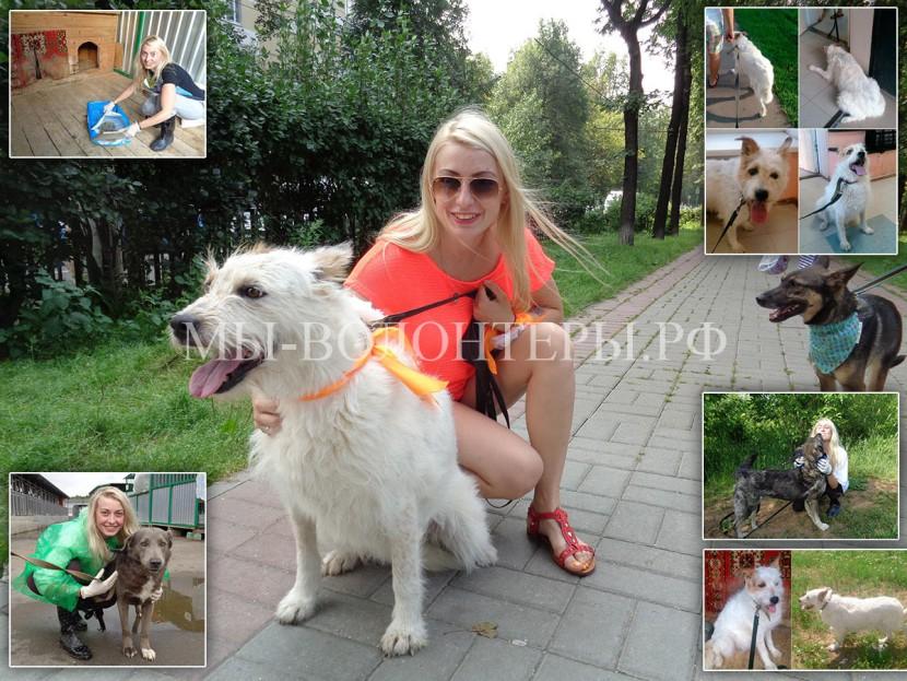 Мария и Нора — история становления волонтера и социализации собаки приюта Щербинка