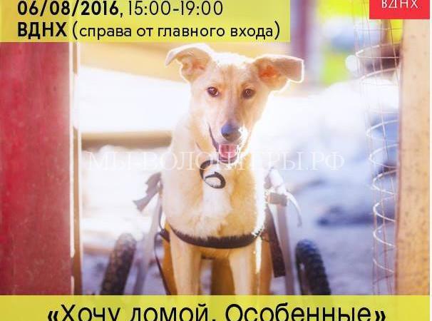 Фестиваль в поддержку собак-инвалидов на ВДНХ
