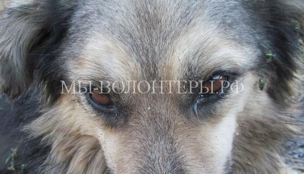 Омск спасает собаку с раздробленными лапами3