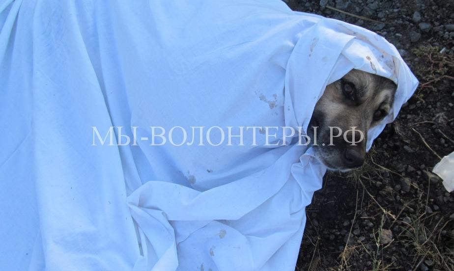 Омск спасает собаку с раздробленными лапами4