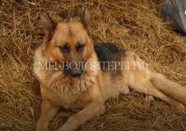 При пожаре в приюте пес Рэд спас своих собратьев