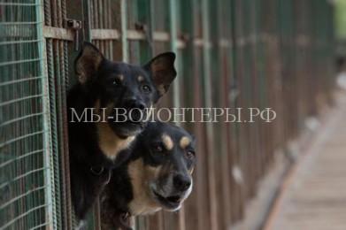 Как функционирует система контроля над бездомными животными в России
