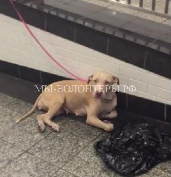 Мимо этой собаки, привязанной в метро, проходили сотни людей….