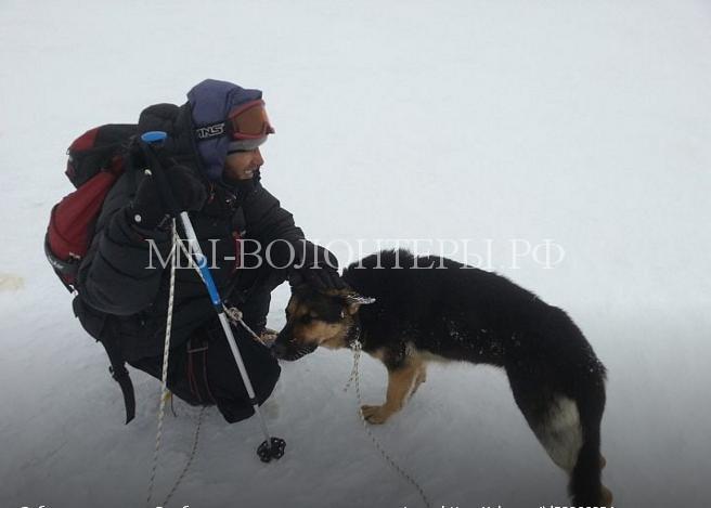 В мире стало на одну счастливую собаку больше — спасение овчарки на Эльбрусе