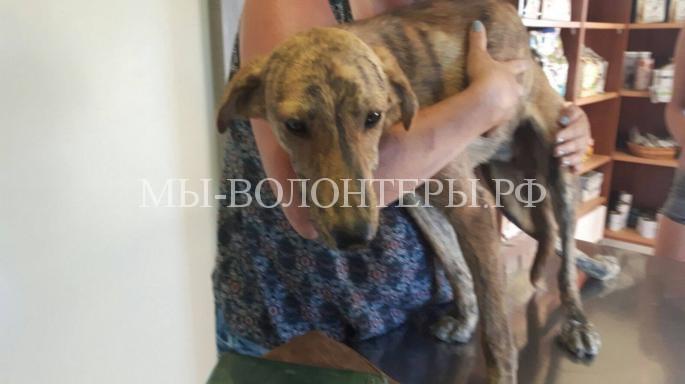 Из туристической поездки вернулись со спасенной собакой