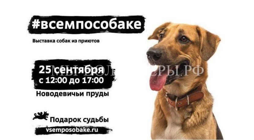 25 сентября в Новодевичьем парке состоится выставка-пристройство собак из приютов