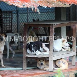 В Сингапуре за безответственное отношение к животным владелец собак приговорен к тюремному заключению и штрафу